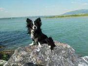 Kimon s Hundepension Bregenz Einfach