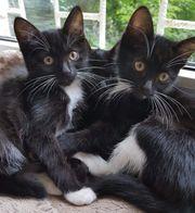 RESERVIERT Verschmuste Katzenmädchen suchen ein