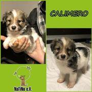 Calimero - liebenswerter Welpe :