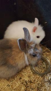 Teddymix kaninchen