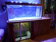 Meerwasseraquarium 500 L komplett mit