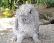 Kaninchen Mädchen 4 Monate alt
