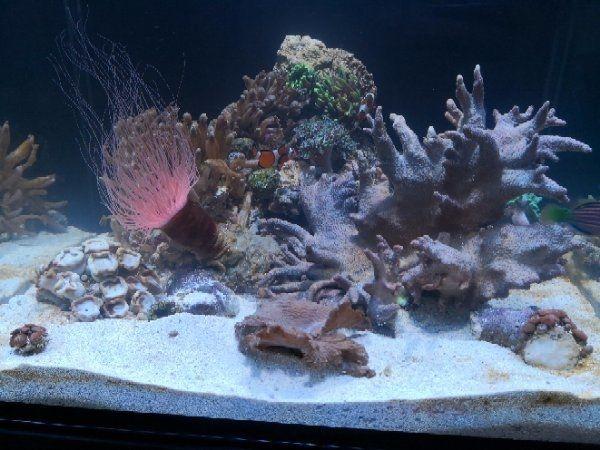 aquaristik bayern aquaristik in f rth bayern bei deinetierwelt aquaristik in bayern ebay. Black Bedroom Furniture Sets. Home Design Ideas