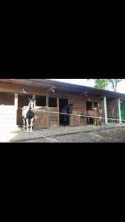 Offenstall Pferd Wiese