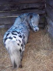 Haus mit Pferdeboxen auf Bauernhof