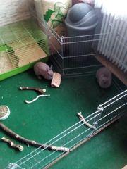 2 Kaninchen weiblich