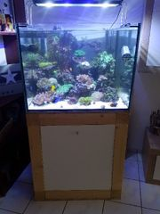 Meerwasseraquarium zuverkaufen!
