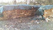 Brennholz 50 cm