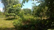 Brasilien 100 Ha Grundstück mit