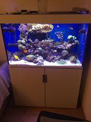 Meerwasser Aquarium incpiria 300