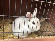 Kaninchenmädchen