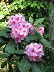 Gartenhelfer auf Minijobbasis