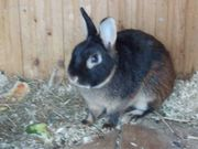 Jede Menge Kaninchen!