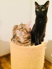 Katzen herzugeben