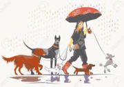 Tiersitter Hund Katzen Nagetiere