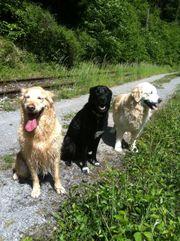 RiDoGs Hundetraining