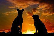 Biete Urlaubsbetreuung Gassi für Hunde