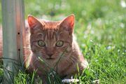 2 jährige Katzendame sucht neuen