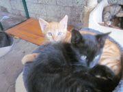 3 süße Katzenbabys