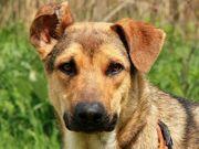 THEO I - spielfreudiger Familienhund