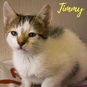 Timmy (Kater aus