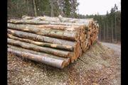 Stammholz Brennholz Eiche