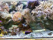 Meerwasser Aquarium komplett incl Tiere