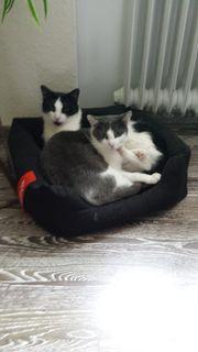 Verständnisvolle Dosenöffner für Katzenduo gesucht