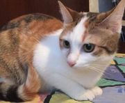 Carol - bezauberndes Katzenmädchen