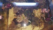 Meerwasser Aquarium ca 130 Liter