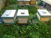 Bienenvölker u Zubehör