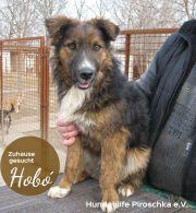 Familie für Hubo