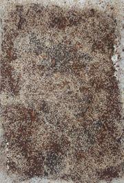 Im Angebot Drosophila Wickenblattläuse