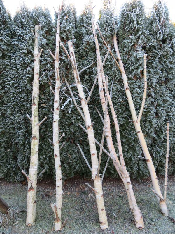 Birke Holz weiße birkenstämme birkenholz birken astgabel garderobenständer in