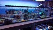 Meerwasser Korallenableger Korallen jeglicher Art