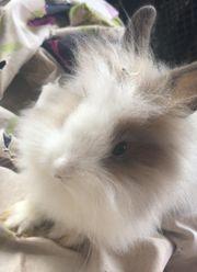 Unsere kaninchen suchen