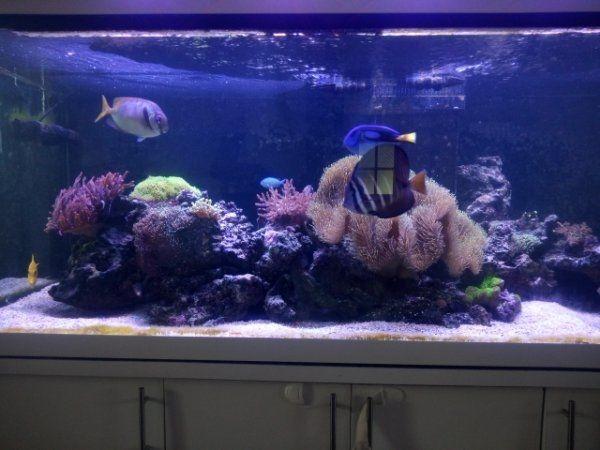 Nano Led Beleuchtung Meerwer | Meerwasseraquarium Komplettset Kaufen Meerwasseraquarium