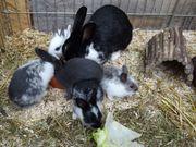 Kaninchen babys suchen