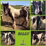 Sally - hübsche Tinker-