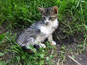Baby Kätzchen *