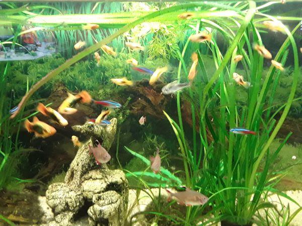 Aquaristik Dresden aquarien dresden: fischfutter wasseraufbereiter für aquarien in