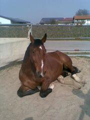 liebevolle Pferdebetreuung und Reitbeteiligung w