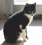 Süße Katze, Franzi