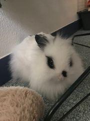 Kleines Kaninchen sucht ein neues