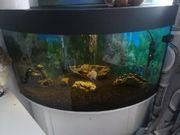 Eck Aquarium mit allem was