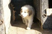 Hundekind Cooper wünscht