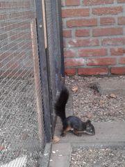 Eichhörnchen von Juni