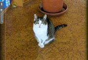 Katze in Blankenloch