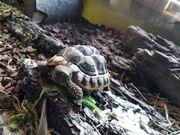 Landschildkröten 2016