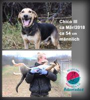 Chico-das Riesenbaby aus dem Shelter